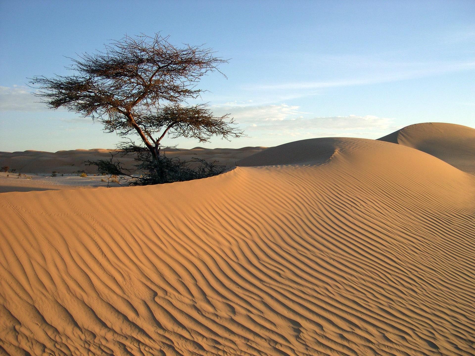 The Banc Darguin National Parc Désert Mauritanie